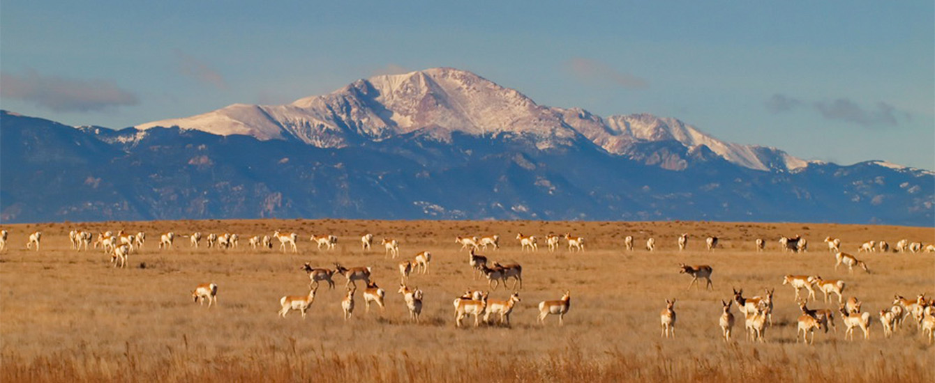 Pronghorn and Pikes Peak Steve Blankenship EPC staff